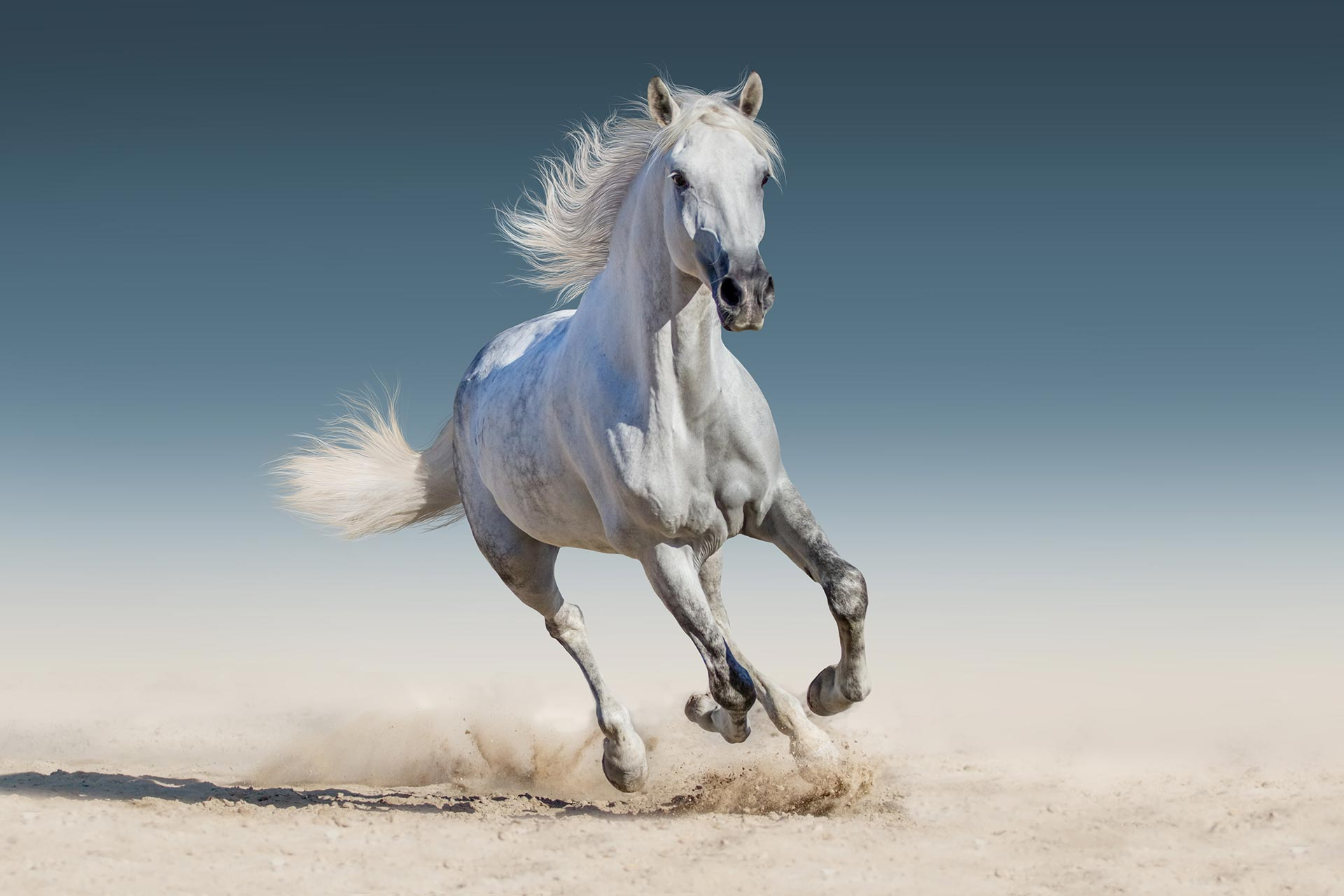 AUSTRALIAN EQUINE EXPORTING SERVICES